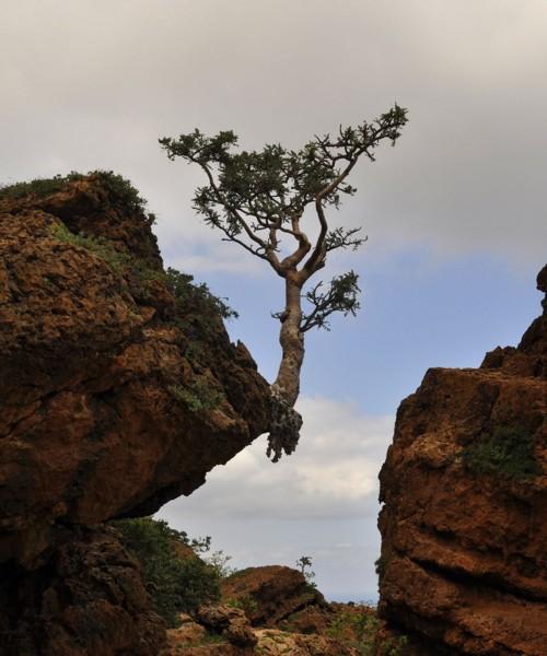 Cliff_tree